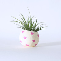 Air Plant Planter with Air Plant - Pink Hearts. Valentine's Day Gift
