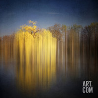 Weeping Willow Photographic Print by Philippe Sainte-Laudy at Art.com