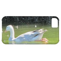 Bird iPhone 5C Case
