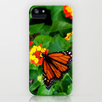 The Hungry Monarch - butterfly floral photograph iPhone & iPod Case by Tess Elizabeth