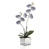Phalaenopsis Potted Plant | Botanicals & Plants | Accessories | Decor | Z Gallerie