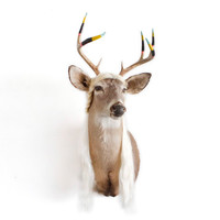 "One Of A Kind ""Tranny Dermy"" TaxiArt Deer with Synthetic Hair & Hand Dipped Painted Antlers"