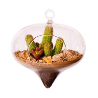 Terrarium Kit for City Folks