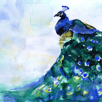 Peacock Watercolor Painting - 16 x 20 - Poster Print
