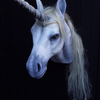 Unicorn. Taxidermied unicorn. Hand made Unicorn sculpture. Unicorn taxidermy. Animal friendly taxidermy. Artificial Taxidermy unicorn