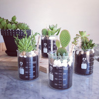 Beaker or Flask potted cacti + succulents