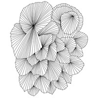 A Fan of a Fan 8x10 Abstract Fine Art Archival Print of Original Pen and Ink Drawing
