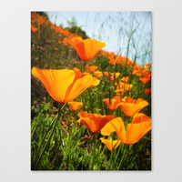 Roadside Beauty Stretched Canvas by DuckyB (Brandi)