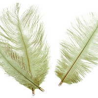 S/6 Ostrich Feathers, Green/Gold