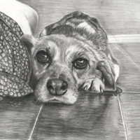 Custom pencil portraits, made to order!