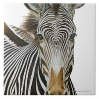 Heart shape pattern on zebras head