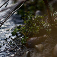 "Nature Photography ""River's Edge"""
