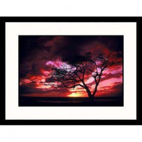Great American Picture Silhouetted Tree at Sunset Framed Photograph - Mick Roessler - IS416073 - Decor