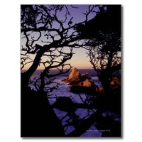 USA, California, Point Lobos, cypress tree and