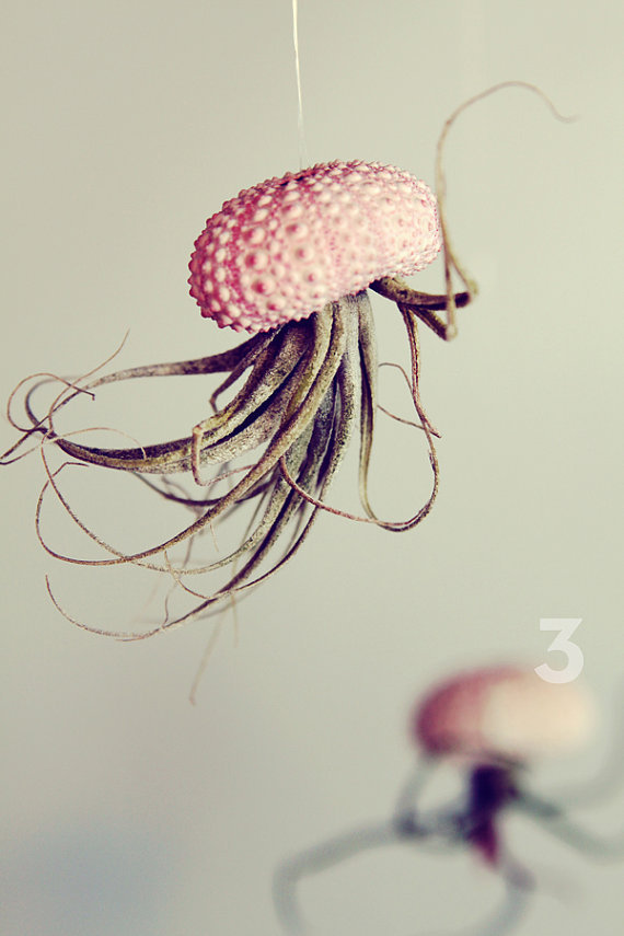 Jellyfish Air Plant // Sea Urchin Wedding Favor by PetitBeast