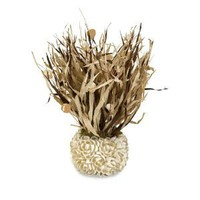 "18"" Nautical Sea Grass Plant with Cayman Shell Accents in a White Floral Vase"