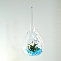 Hanging Handblown Glass Raindrop Air Plant Terrarium, Glass Drop Terrarium, Tear Drop Terrarium, Water Drop Terrarium, Blown Teardrop Glass