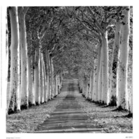 Epernay, France Print by Charlie Waite at Art.com