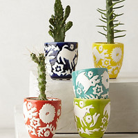 Concha Garden Pot Set by Anthropologie Assorted Set Of 5 Garden