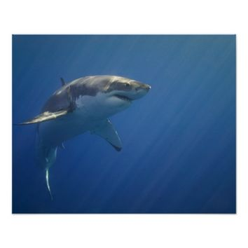 Shark in Open Water