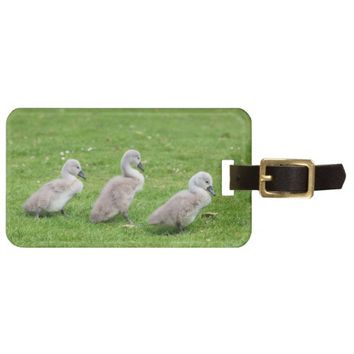 Cute Cygnets Luggage Tag