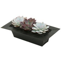 10.5 in. W x 5 in. D x 4 in. H Urban Long Echeveria Garden Plant, 0881012 at The Home Depot - Mobile