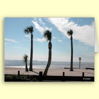 Palm Trees on Clear Day at Beach Blank Card