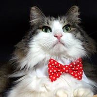 Pet Dog Cat Collar ACCESSORY Bowtie by fingerstory on Etsy
