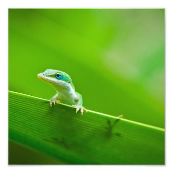 Green Anole Lizard Encounter Art Photography