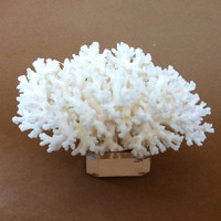 White Lace Coral Branch on Acrylic Base Nautical Beach by nakhome