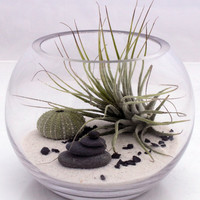Small desktop zen garden terrarium kit with live by XercesArt
