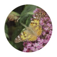 Stained Glass Painted Lady Butterfly Round Chopping Board
