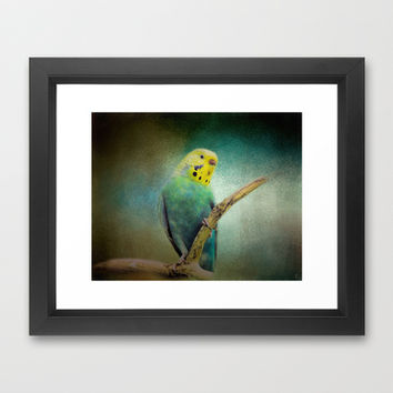 The Budgie Collection - Budgie 1 Framed Art Print by Jai Johnson