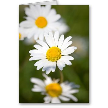 Beautiful Oxeye Daisy Greeting Card