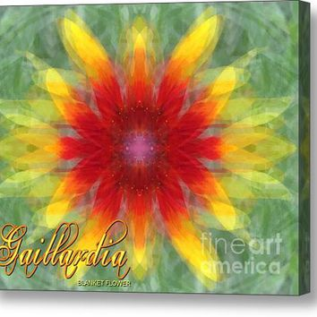 Scattered Blanket Flower Acrylic Print