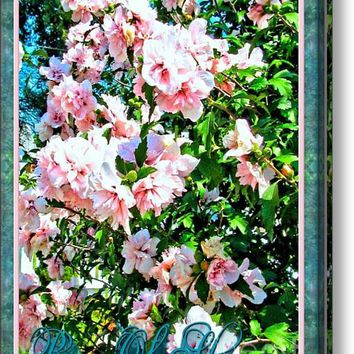 Rose Of Sharon -hibiscus Syriacus Acrylic Print