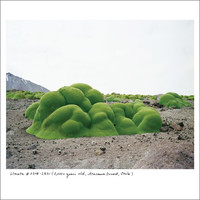 The Oldest Living Things in the World - Signed by Artist