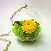 Lush Dome Terrarium  Discounted by wendiland on Etsy