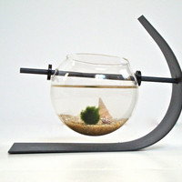 Green Marimo Moss Ball Modern Decor / Table by eGardenStudio