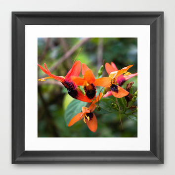 Birds in Flight? Framed Art Print by Legends of Darkness Photography