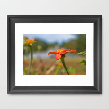 September Flowers Framed Art Print by Legends of Darkness Photography