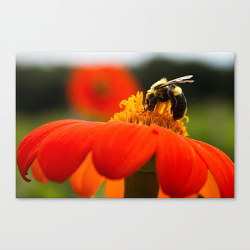bumblebee flower orange macro Wall Accent botanical flora floral Fine Art Photography Wall Decor bee insect apiology Nature Home Accent Gift