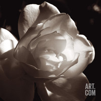 White Rose I Giclee Print by Malcolm Sanders at Art.com