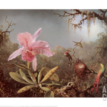 Cattleya Orchid and Three Brazilian Humm Art Print by Martin Johnson Heade at Art.com