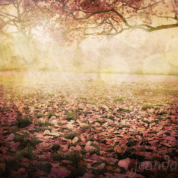 I Awoke In A Dream - PHOTO, surreal photography, blush pink wall art, dreamy, magnolia trees, spring landscape, nature photography