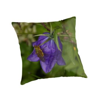 Fly on a Bluebell Flower