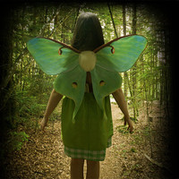 Realistic LUNA MOTH Costume Wings for Halloween, Green Butterfly Wings, Moth Costume - Ready to Ship