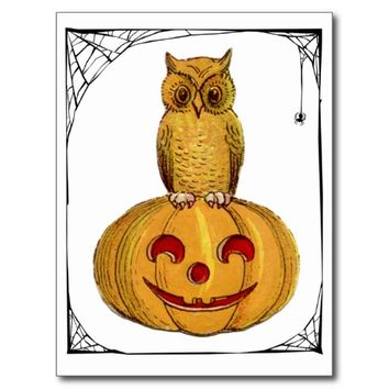 Little Owl Pumpkin Spider Web Halloween Postcard