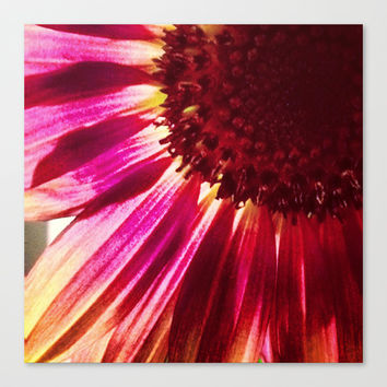 Pink Sunflower Stretched Canvas by Legends of Darkness Photography