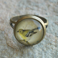 Antiqued Brass Ring with Vintage Yellow Bird on a Branch Graphic
